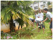 NSS student activities to maintain greenness in the campus