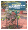 Tree planted by chief guest
